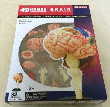 おすすめですが、取扱注意!私が買った脳解剖モデル