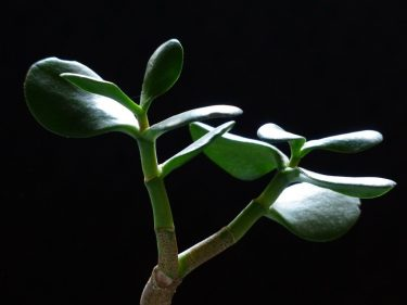 【初心者】 単利と複利の違いはこれだ、 金のなる木を育てる方法